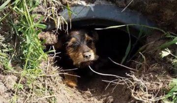 На прогулке муж с женой увидели собаку в канаве и не смогли пройти мимо