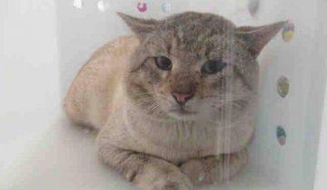 Дикий кот, приговоренный к усыплению, понял: люди бывают и добрыми