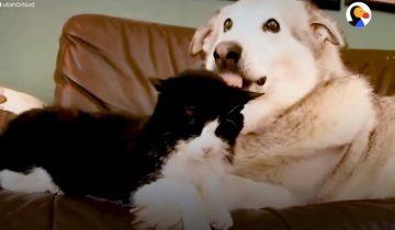 Пес считал кота своим лучшим другом. Но в один ужасный день потерял его…