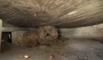 Когда его хозяин умер, родственники продали дом, а пса выбросили на улицу
