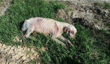 Пес лежал, не двигаясь: он был обессилен от голода и боли
