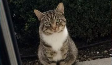 Кот каждый день садится у порога соседского дома