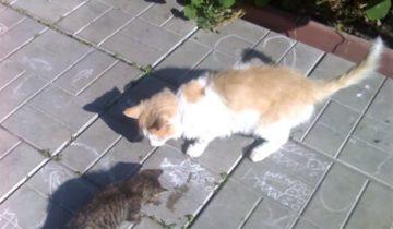 Кот спас котенка. Потом он ушел из дома, чтобы хозяева не отдавали малыша