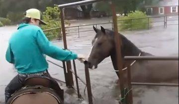 Ураган Харви: отчаянные смельчаки рискуют ради спасения животных