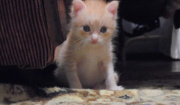 Три котенка в банке с водой: он увидел эту картину, и сердце сжалось