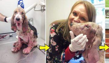 Собаку нашли на грани гибели: она вздрагивала от малейшего прикосновения