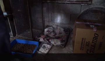 Эта собака долгие годы жила в настоящей темнице