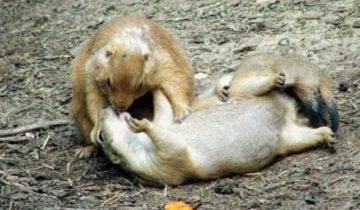 Романтика, как она есть! Трогательные парочки животных (14 фото)