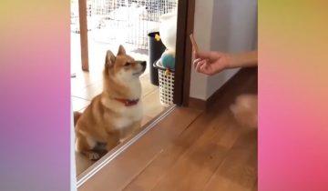 Вы все еще не хотите завести собаку? Этот ролик заставит вас передумать