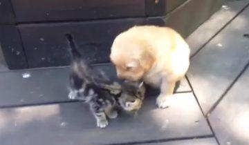 Трогательная дружба щенка и котенка (2,9 млн просмотров)