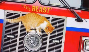 Этот ярко-рыжий кот нашел необычный приют для себя