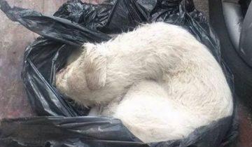 Связанный щенок готовился умереть, завернутый в пакет