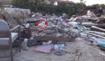 Волонтеры спасли собаку, жившую на горе мусора несколько месяцев
