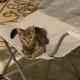 Когда мужчина открыл дверь дома, кот ждал его в кресле