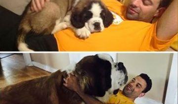 Он был любимым щенком и остался таким… в душе