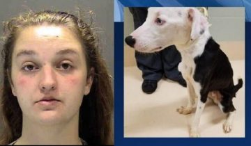 Женщина взяла пса из приюта и довела его до истощения
