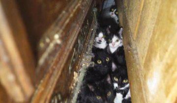 В Париже обнаружили настоящий концлагерь для кошек