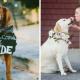 Кто главный гость на свадьбе? Конечно, любимый пес! 9 трогательных снимков