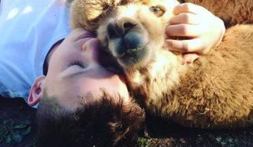 Мальчик уговорил родителей спасти альпаку и обрел верного друга