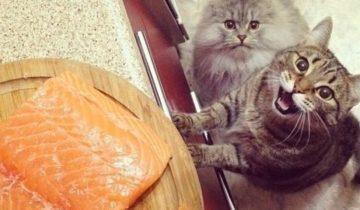 Поделись вкусняшкой! Эти животные умеют выпрашивать еду