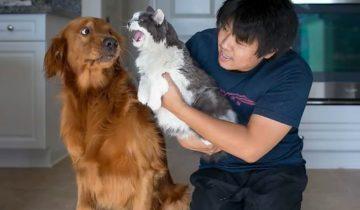 Хозяева решили, что кошка с собакой будут жить дружно