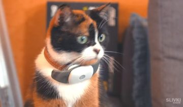 Шесть инновационных гаджетов для котов
