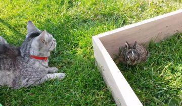 Увидев, как хозяева носятся с крольчонком, кот был не в восторге