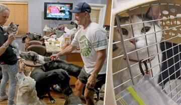 Хозяев, которые бросили животных во время урагана Ирма, накажут по заслугам