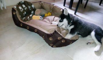 Каждое утро этот щенок хаски застилает свою постель