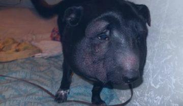 Когда собаку принесли к ветеринару, врачи были в шоке