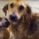 Этих собак никто не любил. И тогда они полюбили друг друга