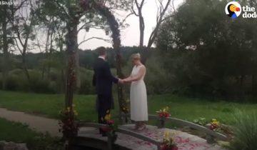 Свадьба шла по намеченному плану, как вдруг пришла нежданная гостья…
