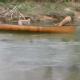 Две собаки неслись в лодке по реке, отчаявшись и ожидая худшего