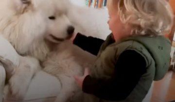 Этот пес — верный партнер мальчугана по шалостям