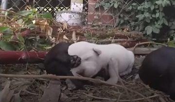 Мамаша-собака отчаянно лаяла, защищая щенков
