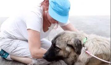 Собака потерялась во время урагана Харви, но наконец увидела свою хозяйку