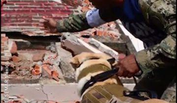 Собака приехала в Мексику спасать пострадавших в землетрясении