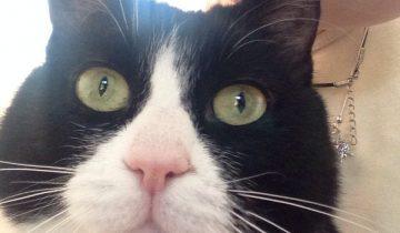 Злодей посадил кота в пакет и стал им бить с размаху