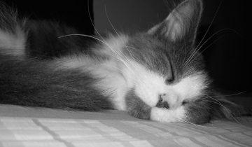 Когда в дом принесли эту кошку, хозяин ругался: «Она бесполезная!»