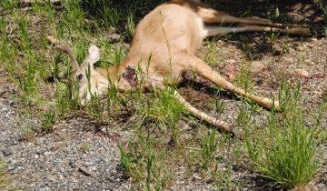 Мужчина нашел мертвого оленя. Но дальше произошло невероятное