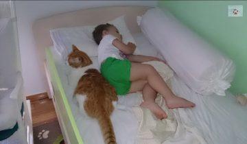 Еще недавно кот не знал, что такое любовь и забота