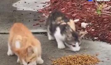 Сначала женщина спасла двоих котят. Потом еще. И еще!