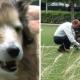 Невероятный урок человечности от владельца старого пса