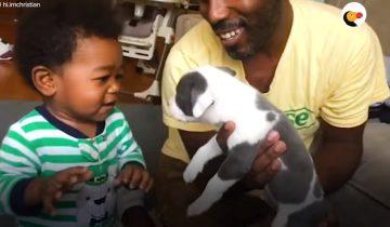Щенок питбуля и малыш: выросли вместе и стали лучшими друзьями