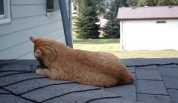 Этот кот обрел совсем неожиданного друга (2,3 млн просмотров)