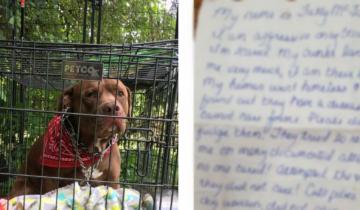 Хозяйка оставила собаку у приюта
