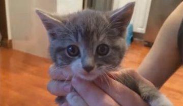 Котенок выбрался из леса с необычной миссией