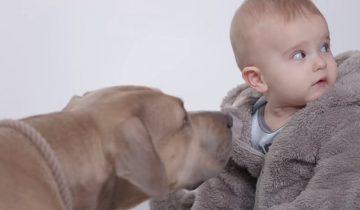 Через секунду малыш повернул голову, увидел пса и…