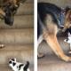 Пес смотрел-смотрел, как котенок карабкается по ступенькам