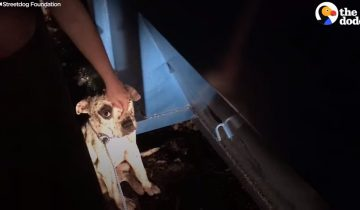 Спасатели нашли его в ужасном состоянии: пес ранен в собачьих боях